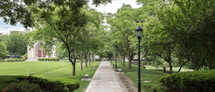 Image of tree lined pathway with chapel in background